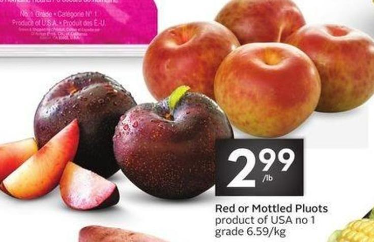 Red or Mottled Pluots