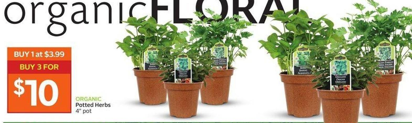 Organic Potted Herbs
