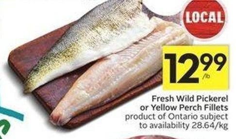 Fresh Wild Pickerel or Yellow Perch Fillets