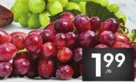 Extra Large Red or Green or Black Seedless Grapes