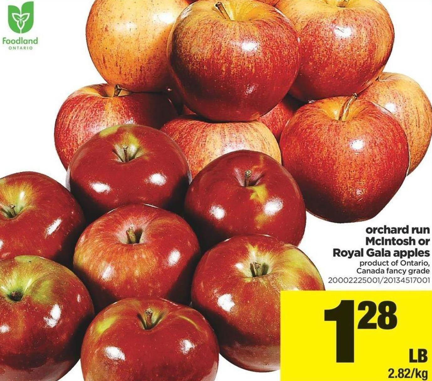 Orchard Run Mcintosh Or Royal Gala Apples