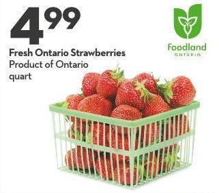 Fresh Ontario Strawberries