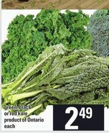 Green - Black Or Red Kale