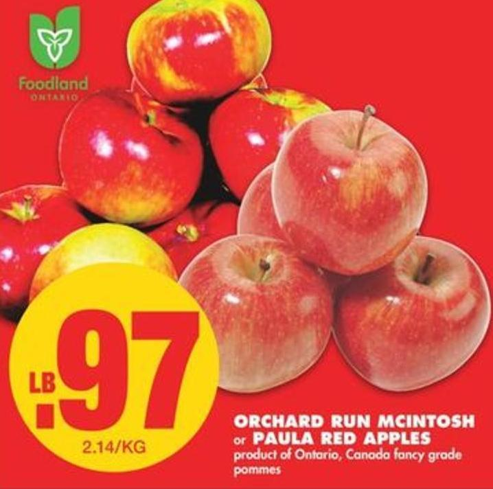 Orchard Run Mcintosh or Paula Red Apples