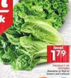 Romaine or Red or Green Leaf Lettuce