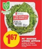 PC Boston Living Lettuce