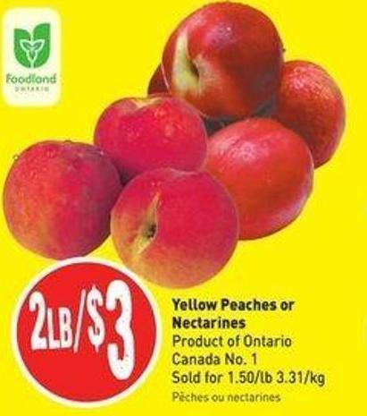 Yellow Peaches or Nectarines Product of Ontario Canada No. 1 Sold For 1.50/lb 3.31/kg