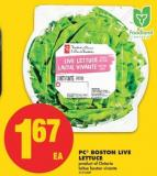 PC Boston Live Lettuce