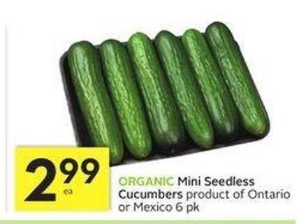 Organic Mini Seedless Cucumbers