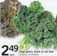 Large Green - Black Or Red Kale