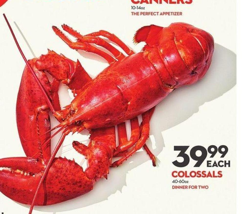 Colossals Freshly Steamed Lobster