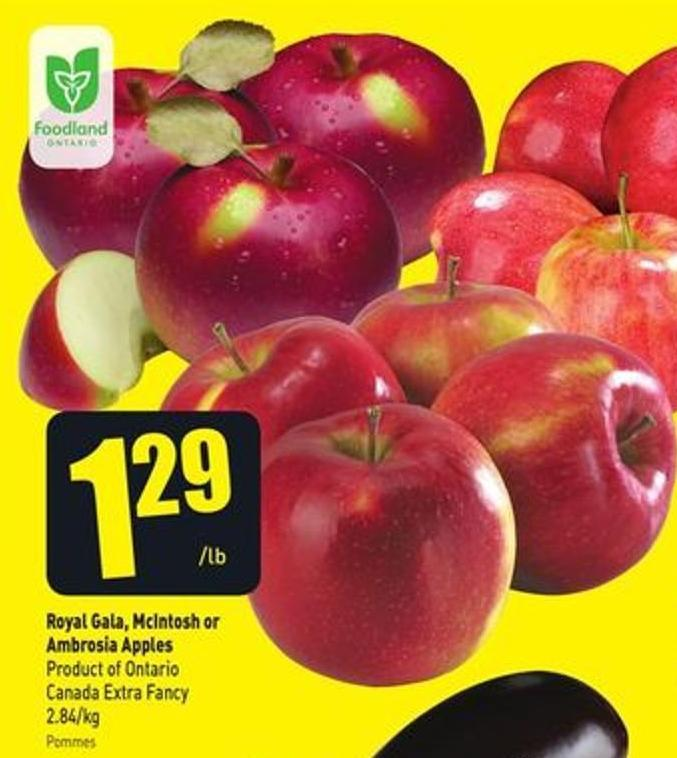 Royal Gala - Mcintosh or Ambrosia Apples Product of Ontario Canada Extra Fancy 2.84/kg