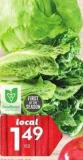 Romaine - Iceberg or Green or Red Leaf Lettuce