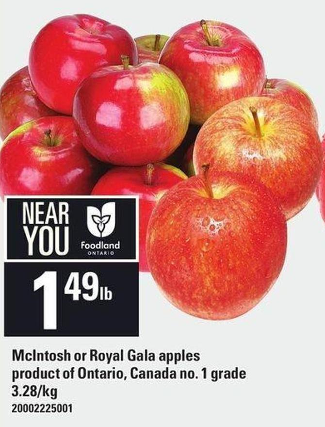 Mcintosh Or Royal Gala Apples