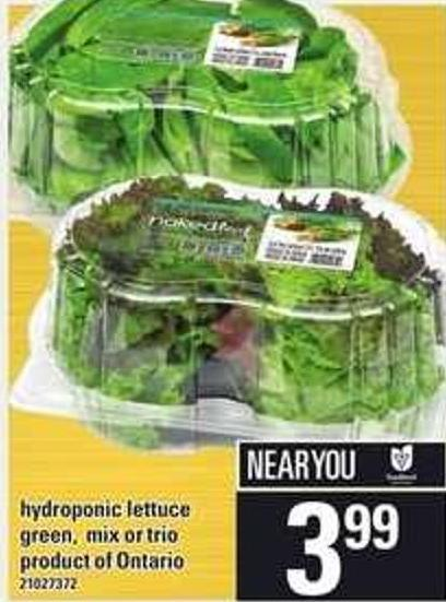Hydroponic Lettuce Green - Mix Or Trio