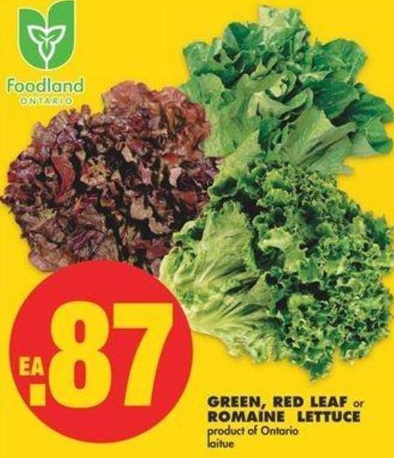 Green - Red Leaf Or Romaine Lettuce