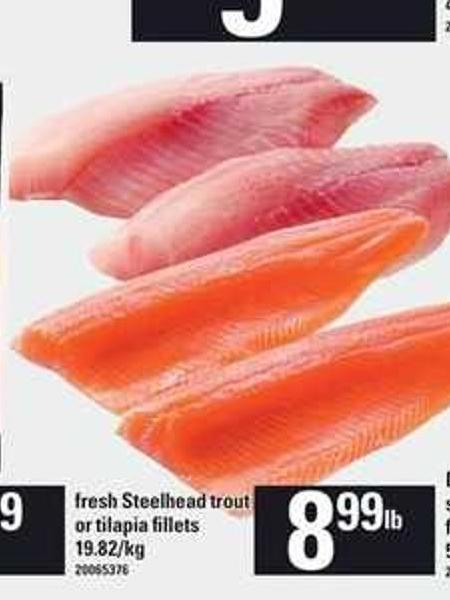 Fresh Steelhead Trout Or Tilapia Fillets