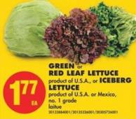 Green or Red Leaf Lettuce or Iceberg Lettuce