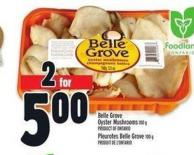 Belle Grove Oyster Mushrooms | Pleurotes Belle Grove