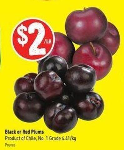 Black or Red Plums Product of Chile - No. 1 Grade 4.41/kg
