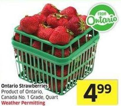 Ontario Strawberries Product of Ontario - Canada No. 1 Grade - Quart