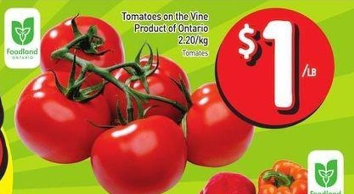 Tomatoes On The Vine Product of Ontario 2.20/kg