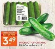 Mini Cucumbers No 1 Product Of Ontario