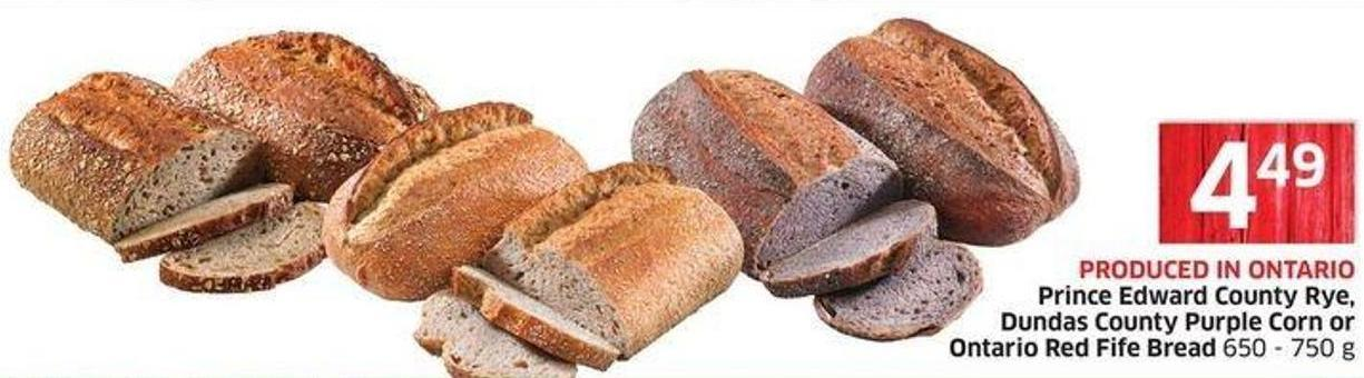 Prince Edward County Rye - Dundas County Purple Corn or Ontario Red Fife Bread 650 - 750 g