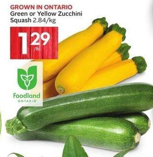Green or Yellow Zucchini Squash