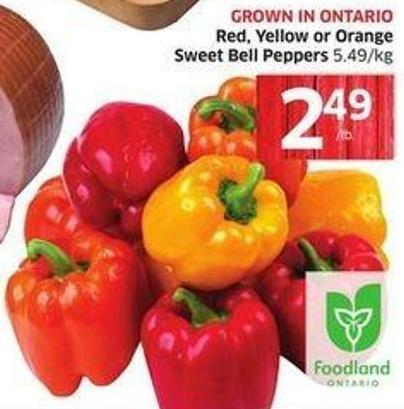 Red - Yellow or Orange Sweet Bell Peppers 5.49/kg