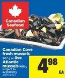 Canadian Cove Fresh Mussels - 907 G Or Live Atlantic Mussels - 908 G