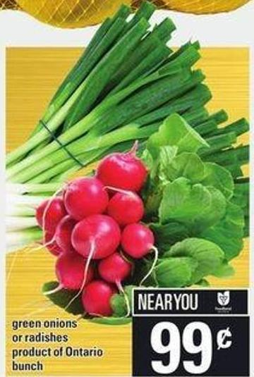 Green Onions Or Radishes - Bunch