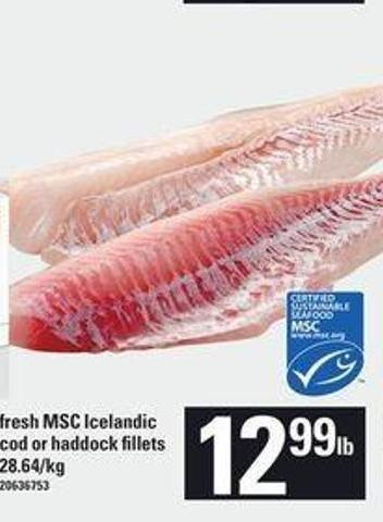 Fresh Msc Icelandic Cod Or Haddock Fillets