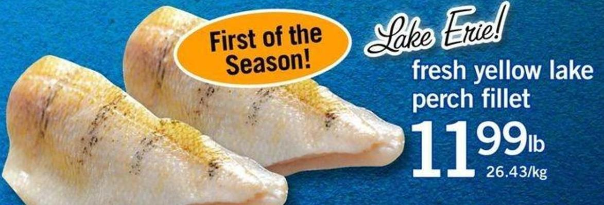 Fresh Yellow Lake Perch Fillet
