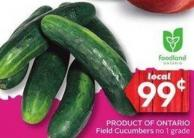 Field Cucumbers No 1 Grade