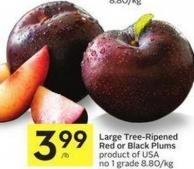 Large Tree-ripened Red or Black Plums Product of USA No 1 Grade 8.80/kg