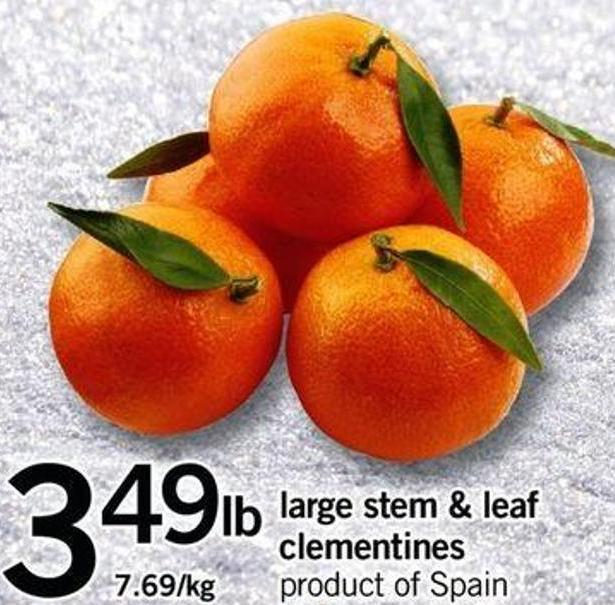 Large Stem & Leaf Clementines