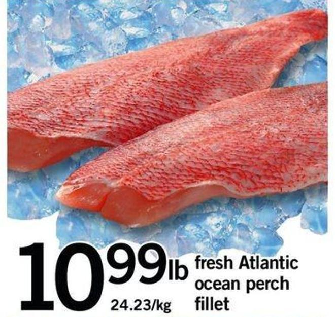 Fresh Atlantic Ocean Perch Fillet