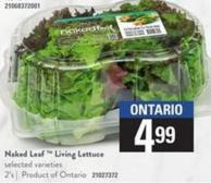 Naked Leaf  Living Lettuce