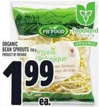 Organic Bean Sprouts