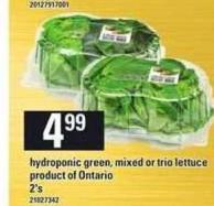 Hydroponic Green - Mixed Or Trio Lettuce - 2's