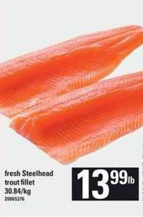 Fresh Steelhead Trout Fillet