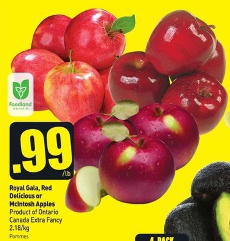 Royal Gala - Red Delicious or Mcintosh Apples Product of Ontario Canada Extra Fancy 2.18/kg
