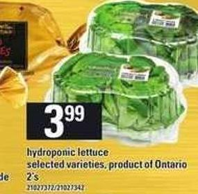 Hydroponic Lettuce - 2's