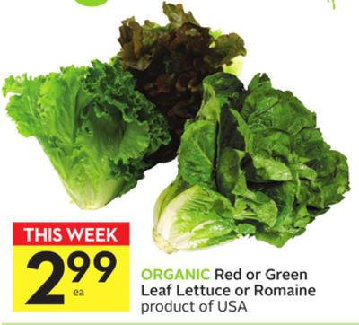 Red or Green Leaf Lettuce or Romaine