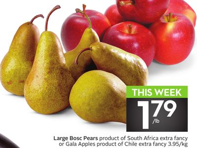 Large Bosc Pears