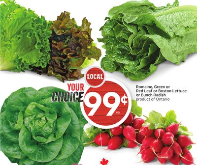 Romaine - Green or Red Leaf or Boston Lettuce or Bunch Radish