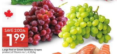 Large Red or Green Seedless Grapes