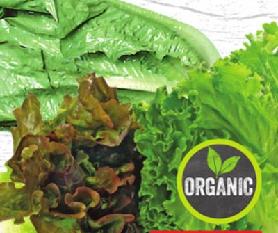 Organic Romaine - Green or Red Leaf Lettuce