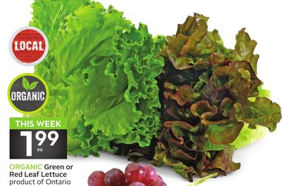 Organic Green or Red Leaf Lettuce